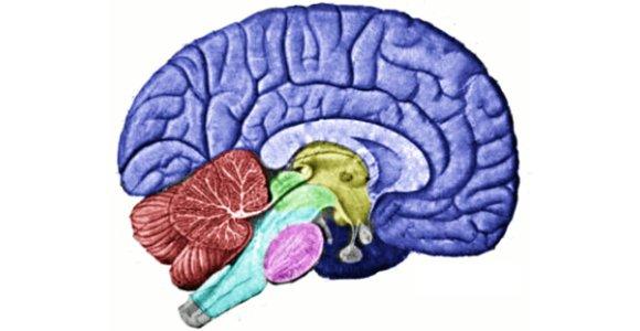 Brain Map Thumb
